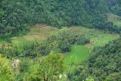 Ansichten von terassenförmig angelegten Reisfeldern lizenzfreie stockfotografie