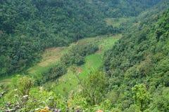 Ansichten von terassenförmig angelegten Reisfeldern lizenzfreie stockfotos
