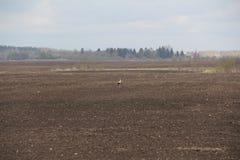 Ansichtfelder in der Mitte des Storchs Lizenzfreie Stockfotos