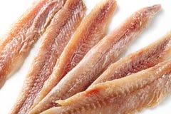 Ansjovis. matbakgrund Royaltyfri Bild