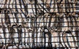 Ansjovisgaller Arkivbild