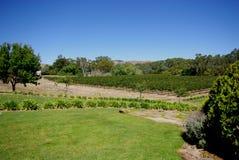 anslags- s vingård för burge Arkivbild