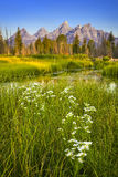 Anslags- tetonnationalpark Royaltyfri Foto