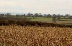 Ansley-Landschaft stockbild