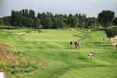 Anslutning för yrkesmässig golf för damer Royaltyfri Foto