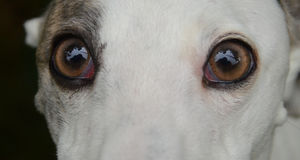 Anstarrende Augen Stockfotografie