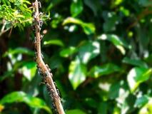 Ansteckungsfliege als Bote des Schmutzes und der Ansteckung stockfotografie