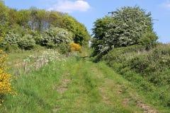 Ansteigende Ansicht des Fußwegs zwischen Ackerland Treeton Stockbild