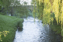 Anstey Brook. Early in the morning, with the sun highlighting the willow tree in the right foreground. Packhorse Bridge in the background. Small waterfall in Stock Photography