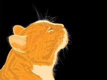 Anstrykningar för kattluktvår på svart bakgrund Arkivbild