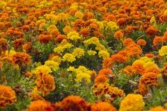 Ansvar av blommor Arkivbild