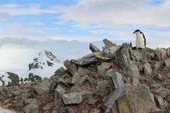 A Antártica - pinguins Imagem de Stock