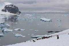 A Antártica - pinguins Fotos de Stock