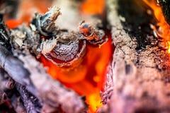 Antända branden Värma den kalla vintern upp på nätterna Arkivbild