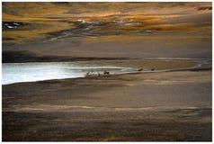 Antílope Foto de archivo libre de regalías