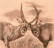 Antílope dois Imagem de Stock Royalty Free