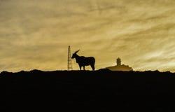 Antílope en la salida del sol Fotos de archivo