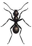 Ant royalty free illustration