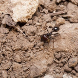 Ant Stock Photos