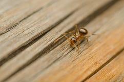Free Ant Stock Photo - 27334790