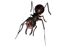 Ant. 3D Royalty Free Stock Photo
