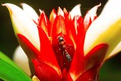 Ant, Aarey Milk Colony. INDIA Royalty Free Stock Image
