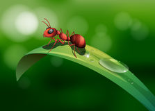 An ant above the leaf. Illustration of an ant above the leaf Stock Photography