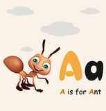 Ant with alphabate Stock Photography