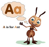 Ant with alphabate Stock Photo