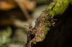 Ant, animals, macro, insect, arthropod, nature, invertebrate Stock Photo