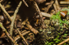 Ant, animals, macro, insect, arthropod, nature, invertebrate. Forest ants in the wild live royalty free stock photography