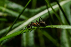Ant, animals, macro, insect, arthropod, nature, invertebrate. Forest ants in the wild live stock image