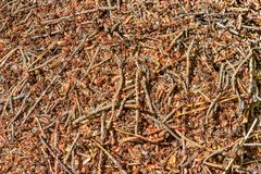 Abstract background the aboveground part of the Nest of twigs an. Ant ant nest from pieces of leaves, pine needles, twigs and earth Red wood ant Formica rufa are Royalty Free Stock Image