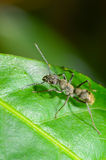 Ant. S as prey living in the wild Stock Photo