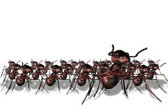 Ant arrmy Royalty Free Stock Images