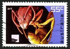 Ant Australian Postage Stamp Photos stock