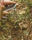 Ant Being Photographed auf einem Mobiltelefon Stockbild