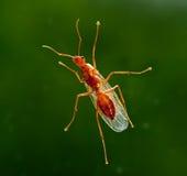 ant below carpenter male worker Στοκ Φωτογραφία