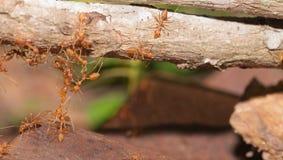 Ant bridge unity Royalty Free Stock Photography
