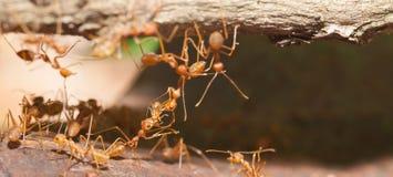 Ant bridge unity Stock Image