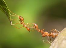 Ant bridge unity Stock Photos