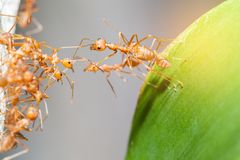 Ant bridge unity. Selective focus Royalty Free Stock Photos