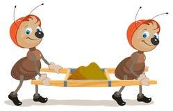 Ant Builder Due formiche sono barelle con la sabbia Immagini Stock