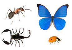 Ant, butterfly, scorpion and ladybug Royalty Free Stock Images