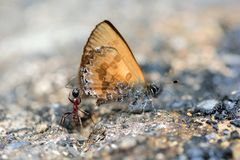 Ant and Butterfly Royalty Free Stock Images