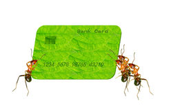 Ant card Stock Image