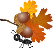 Ant carrying autumn acorns Royalty Free Stock Images
