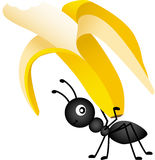 Ant Carrying a Banana Stock Photo