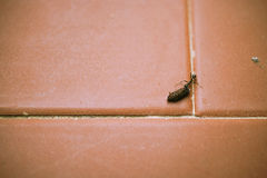 Ant carrying burden on tiled floor royalty free stock photo