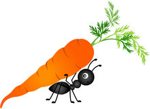 Ant Carrying Carrot Royalty Free Stock Photos